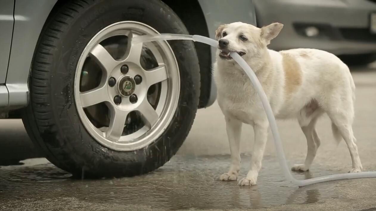 短片 | 流浪狗化身丘比特幽默广告《狗的报恩》
