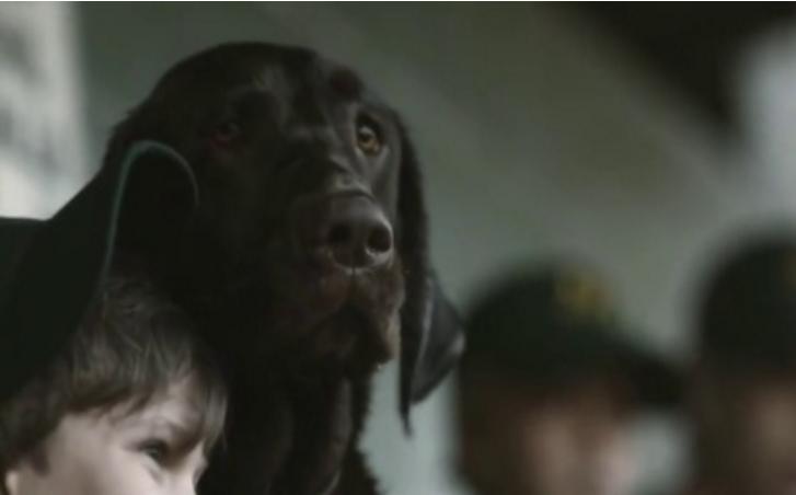 短片 | 催泪感人治愈系广告《男孩与他的狗狗》