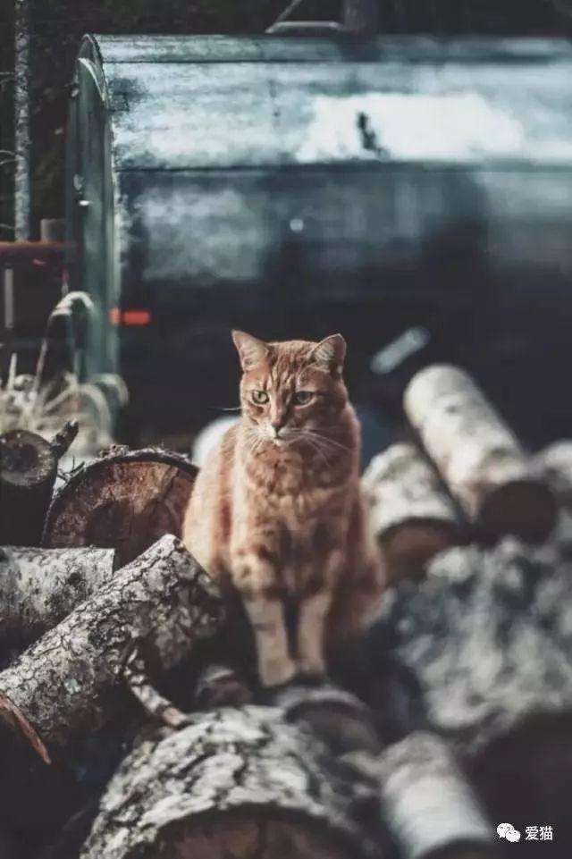 研究称养猫能防癌,好处真太多了!