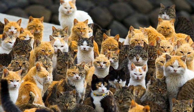 这个地方老鼠成患,引进大量猫咪,如今却成了这样!