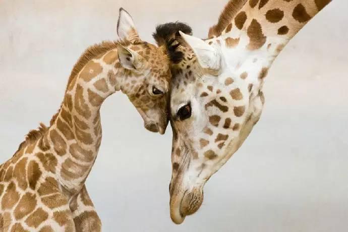 15张经典动物母爱照片,温暖你的心