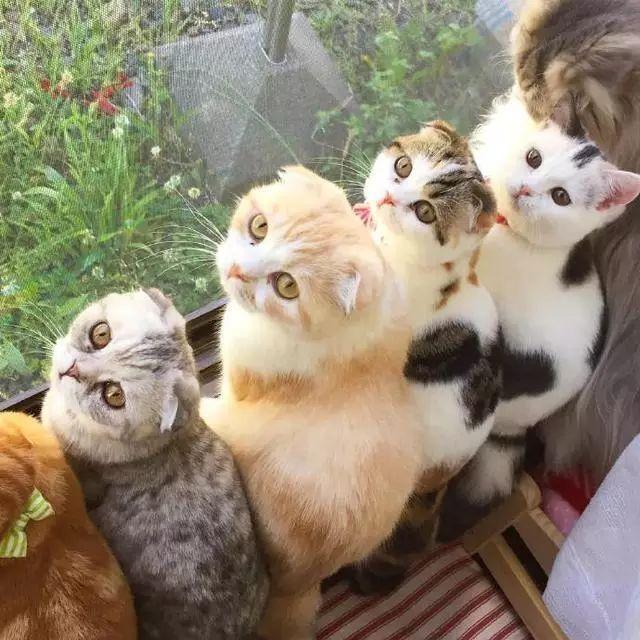 连只猫都没有,你还想进入上流社会?