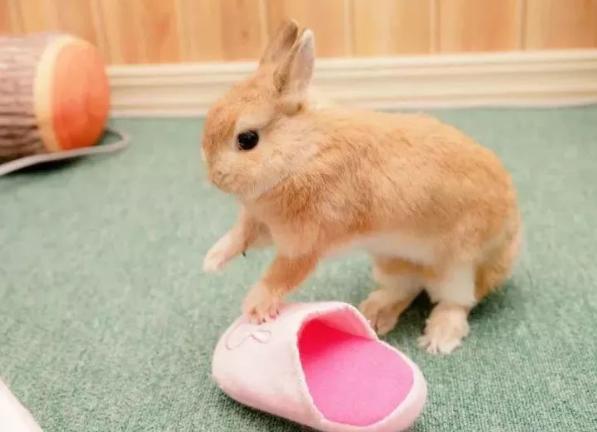 日本这位铲屎官一口气养了8只兔兔,每一只都萌得不可思议